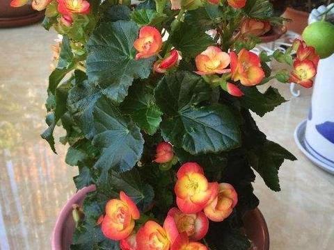 想要在家四季赏花,当居家盆栽4款花卉,好看又好养,盆盆爆满