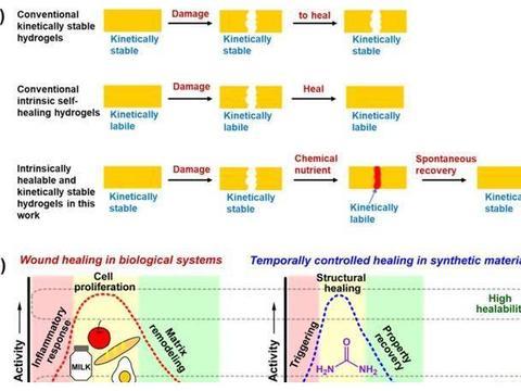 化学养分供给调控高动力学稳定性水凝胶的瞬态修复能力