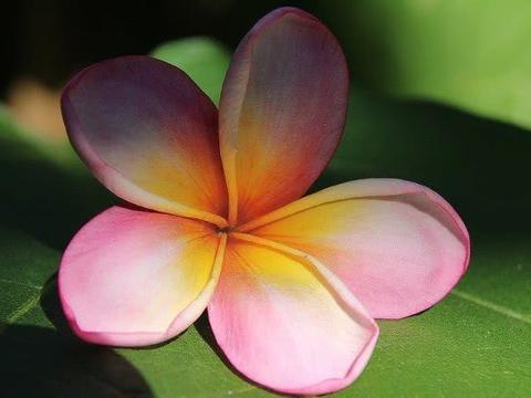 十六天之内,缘分与桃花随之而来,收获真爱重返热恋的4大生肖!