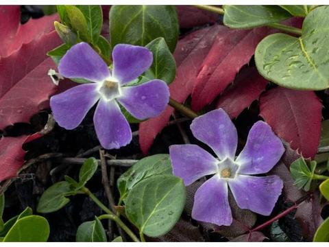 未来一周内,缘分与桃花汹涌而至,月老来袭,余生幸福的4大生肖
