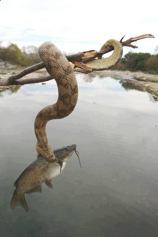 镜头下:动物界残酷无情的生存之战!看着心惊胆战!