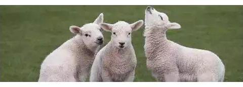 属羊人:未来7天,有一消息,是囍是悲?