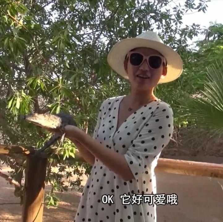 主播旅行社丨在突尼斯观赏捕食能手——尼罗河巨鳄