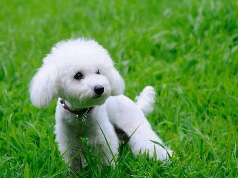 28只小奶狗围在身边,金毛被吓得到处躲,狗子:都是我生的?