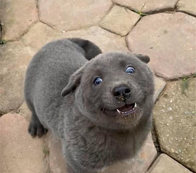 """这只小狗有点不同,有人说是猫狗杂交,它爬到屋顶想""""静静"""""""