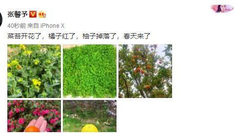 张馨予居家生活太惬意,自家院子种满橘树和柚子,豪宅内景曝光