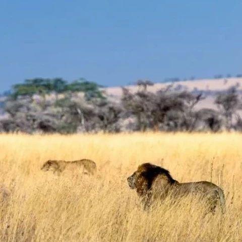 暑期东非野生动物大迁徙考察 | 活动报名