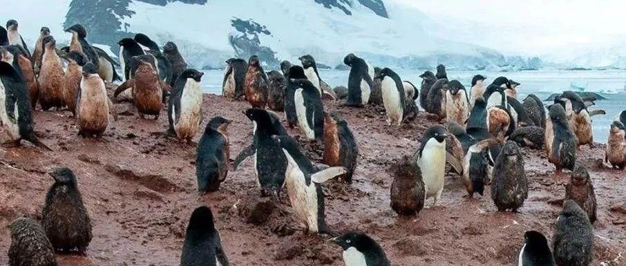 青藏高原发现28种新病毒,南北极拍下的照片让人后背发凉……