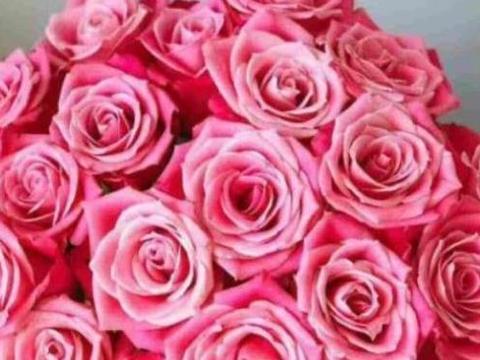 """""""珍稀玫瑰""""泰姬,如月下美姬,清秀淡雅,可以说是养花首选!"""