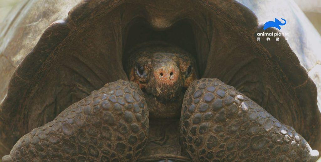 专家勇闯活火山 成功发现消失了112年的费南迪纳巨陆龟