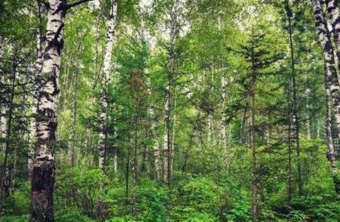 走进黑龙江汤旺河,感受林海奇石的魅力,体验更多的森林韵味