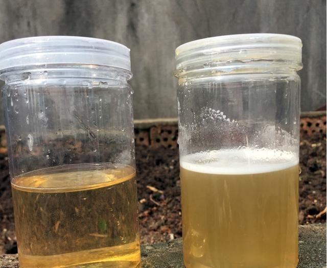 如何鉴别真假蜂蜜?蜂农教我5招,只需一杯水,假蜂蜜原形毕露