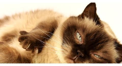 抱猫占星2020天蝎座年运势——人缘变好,感情转变