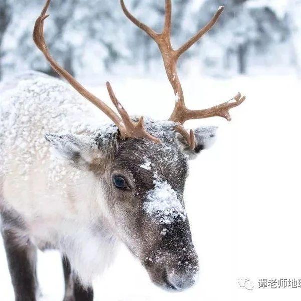 【考题预测】从驯鹿大迁徙看地理环境对动物的生存影响(附模拟考题)