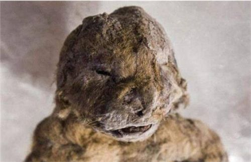 西伯利亚永久冻土层中,发现灭绝1.4万年的动物,和远古超级病毒