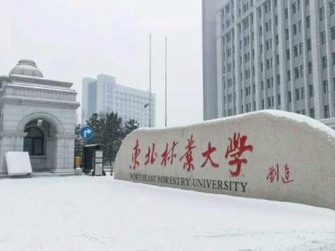 中国面积最大的学校,占地136公顷,在学校谈恋爱都像异地恋!