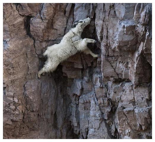悬崖被困男子,警察求救报警十表情包鸭子动漫钱块,山羊的一番话让男图片