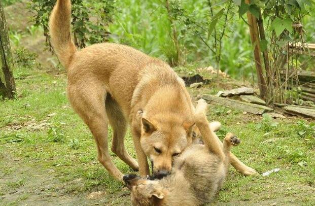 梦见不认识的人有养狗的还有专门偷狗的东西