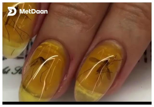 大胆想法_幽默笑话:指甲琥珀蚊,里面是不是史前蚊子,我有个大胆的想法