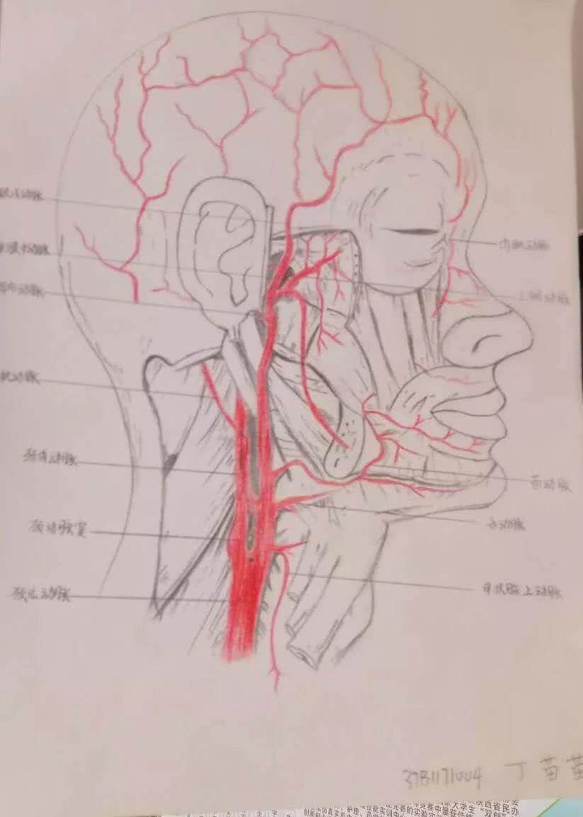 别开生面的作品展:网红手绘解剖图 不一样的医学笔记