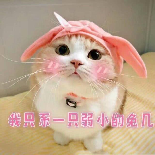 萌猫有趣表情包,我带着可爱和萌萌哒,日常打卡来了!图片