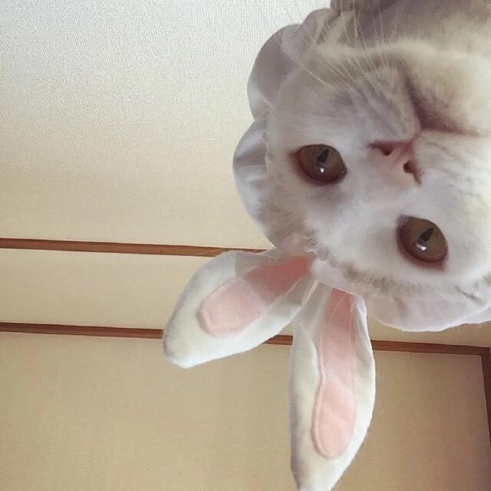 超可爱的猫咪头像 吸喵吧!_新浪看点