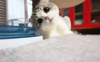 孕妇养猫注意事项_新手养猫必备知识注意事项:初次养猫需要准备什么 ?