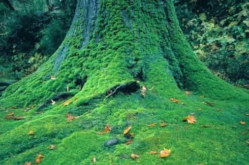 百年千载俯首撑起一片天地——《根铭》山林子自然道德智慧诗
