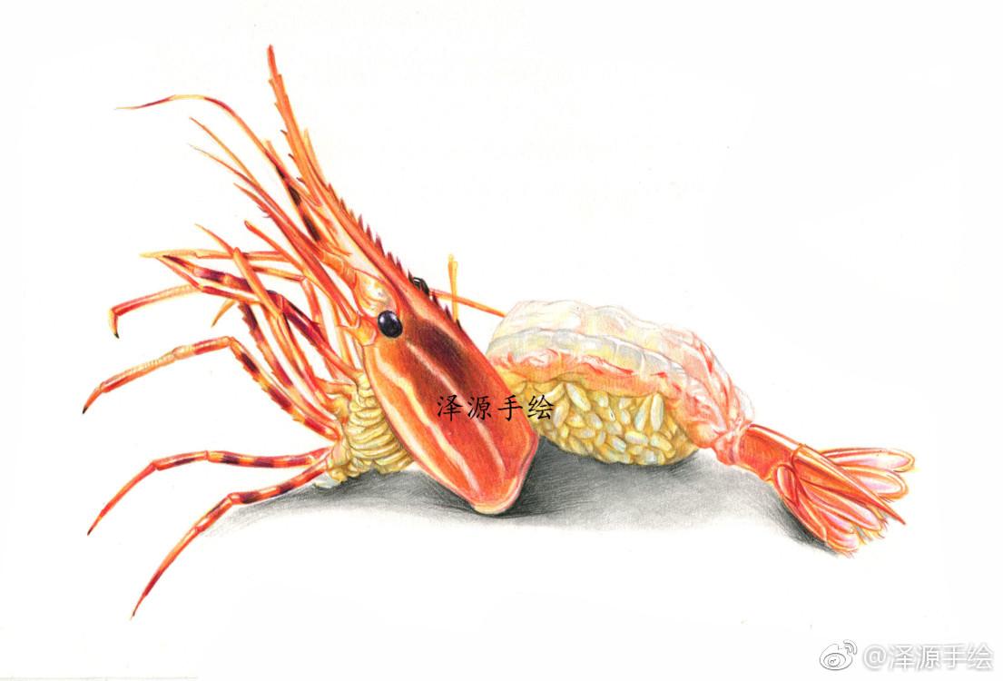 龙虾寿司,红辉水溶绘制,泽源彩铅手绘向您推荐了一节人气好课