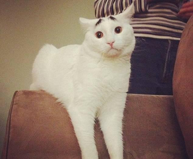 麻将各种猫咪搞笑的图集经典!不可惜太收藏表情表情图片包的打微关于信图片