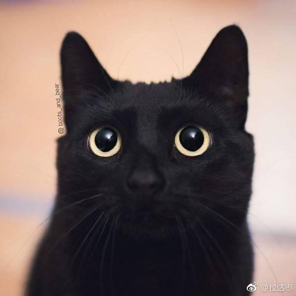 可爱的黑猫,可以说是非常精致了ins:boots_and_bear