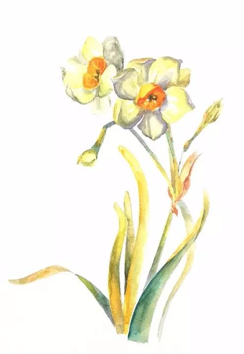 花卉の水 彩手绘水彩花草