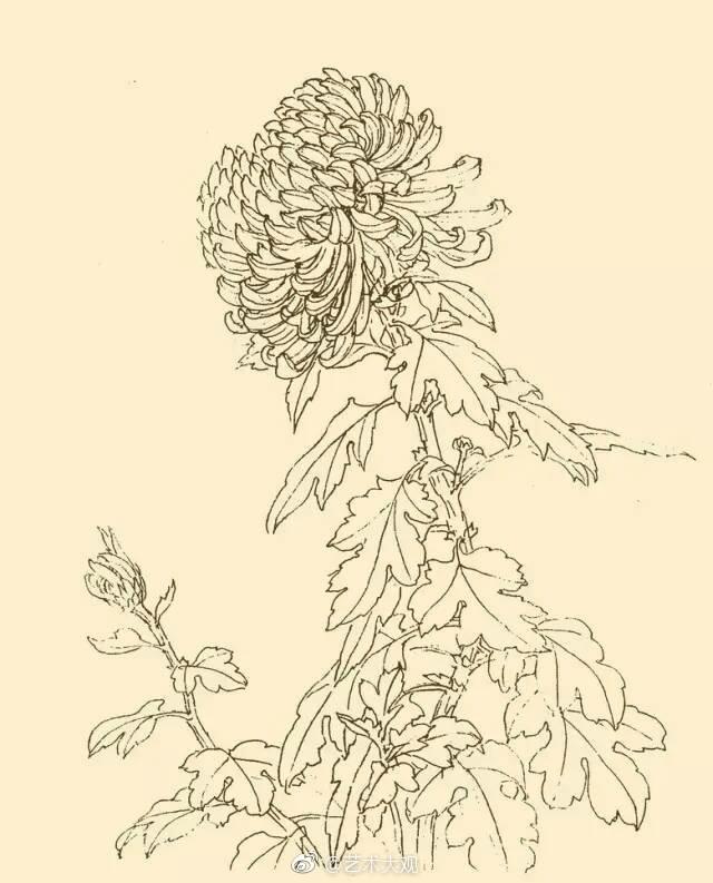 一组花卉白描画图片