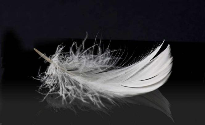 心理测试:你选择哪一根羽毛?测你的角色是天使还是魔鬼?