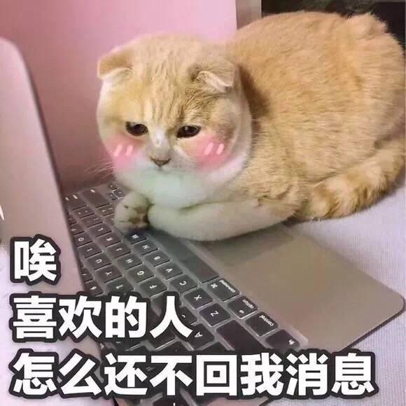 晚安图片表情图片,猫咪包不表情我图片