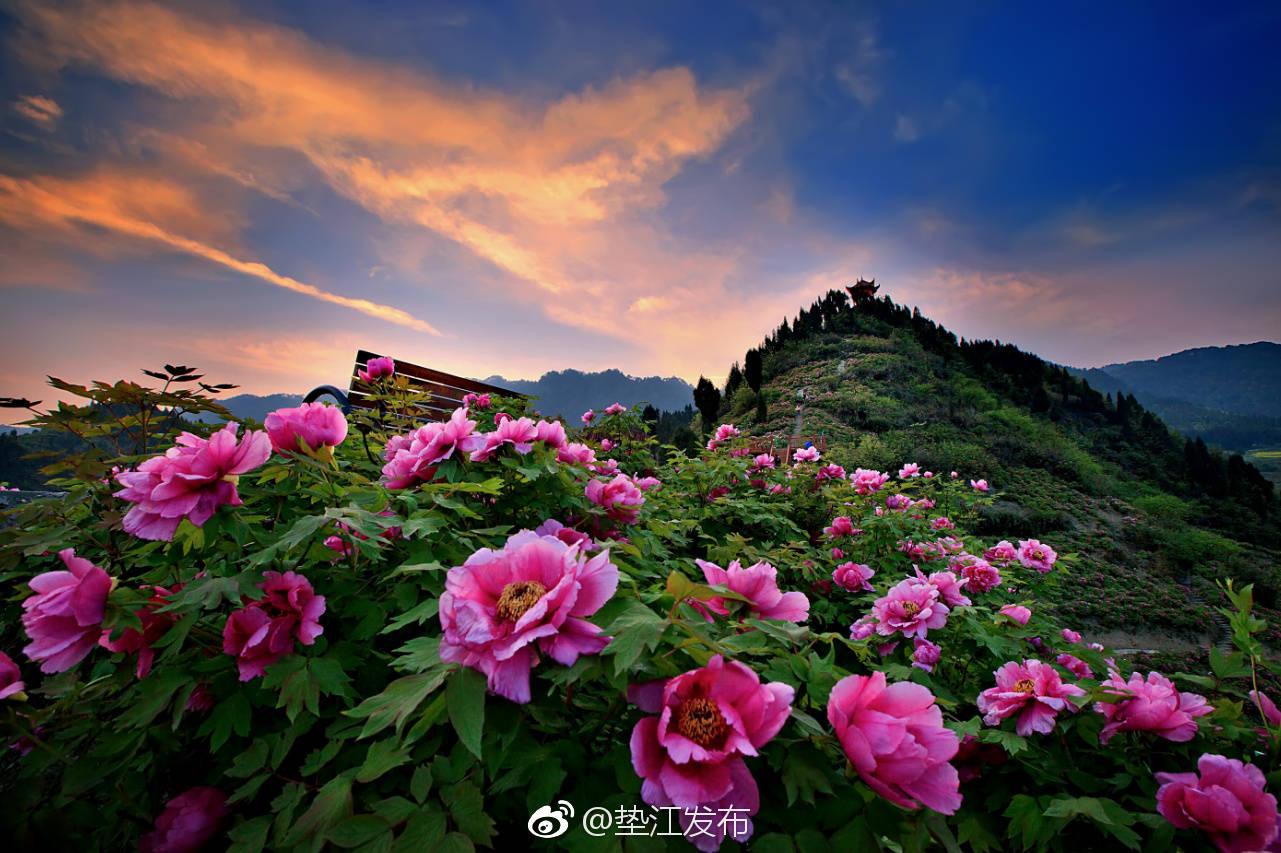 垫江牡丹景区花海获融资2.5亿元积极打造AAA鉴赏特色及美食山水风景图片