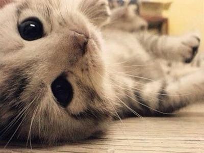 一个喜欢猫的男人_犬系男人和猫系男人,你更喜欢哪一种?