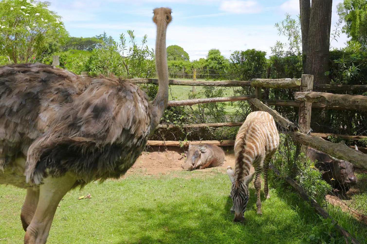 游览 非洲 肯尼亚 肯尼亚山动物孤儿院