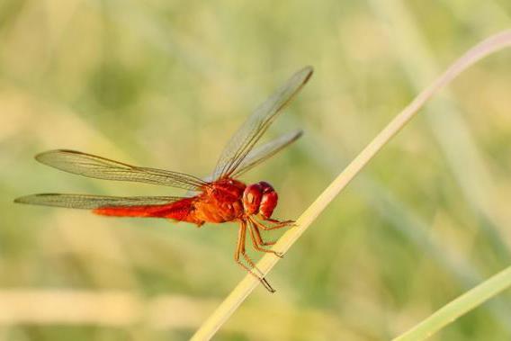 大姚的香草地 蜻蜓飞过,无尽夏意
