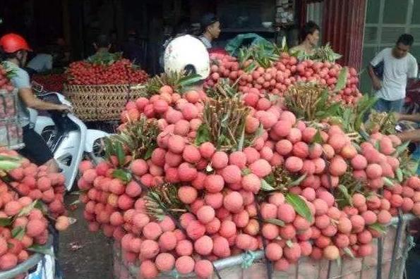 中国进口越南6466吨荔枝,同比去年增长37%,为啥不买国内的?