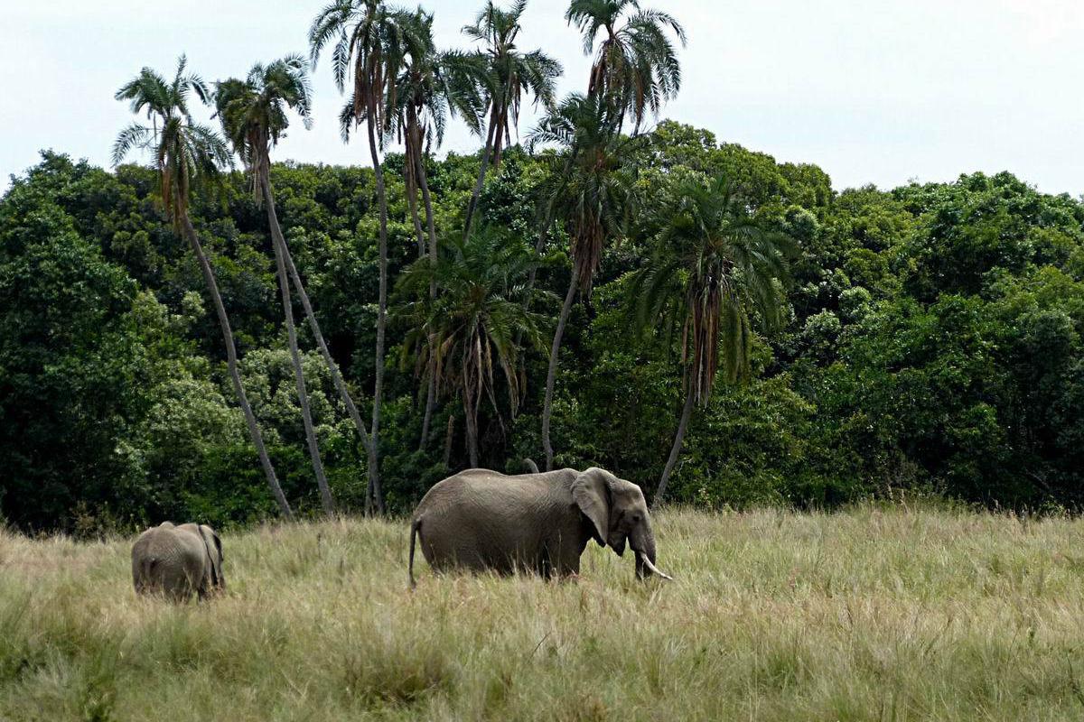 游览 非洲 肯尼亚 肯尼亚山国家公园