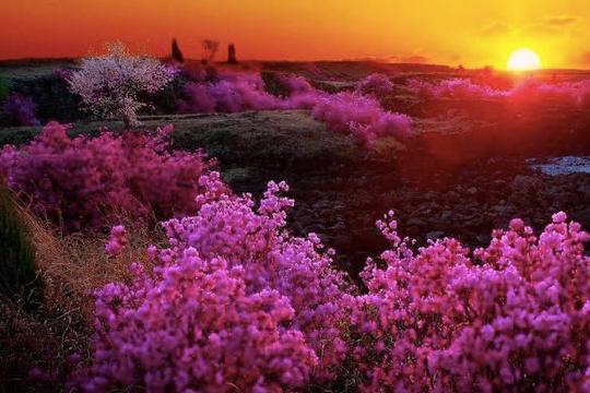 欧阳修的这首诗比较冷门,却是惜春诗中的高作,值得一读!