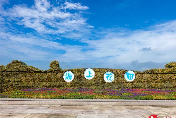 带你走进向日葵的海洋,杭州湾海上花田一日游