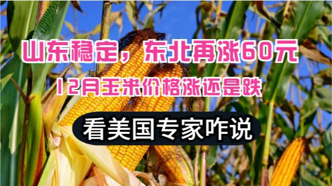 山东稳定,东北涨60元,12月玉米价格涨还是跌?美国专家咋说