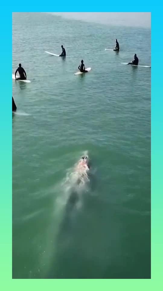 小伙伴们在深海冲浪,突然出现一条鲸鱼,接下来大家一动不动