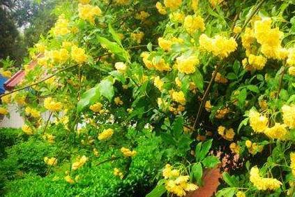 我若有个小院子,就养3种花,一年到头有花看,喝茶赏花,不出门