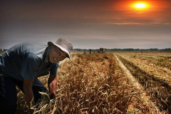 诗人看到农夫割麦子,写下一首唐诗,堪称最具良心文人之作