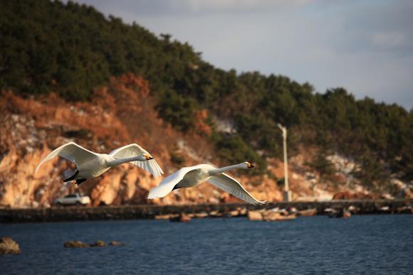 北方最美的天鹅栖息地,威海烟墩角,长天碧水,秀丽渔村美成童话
