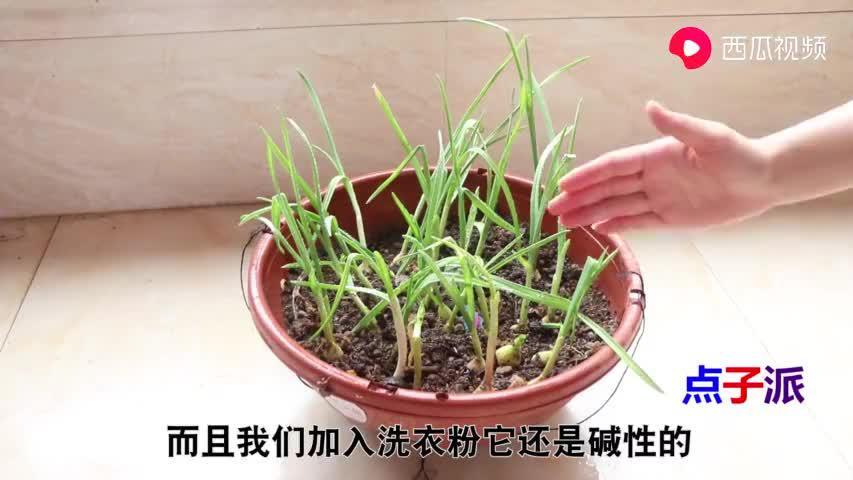 蔬菜长虫别急着打农药,只需喷一点它,蔬菜蹭蹭长,再也不怕长虫
