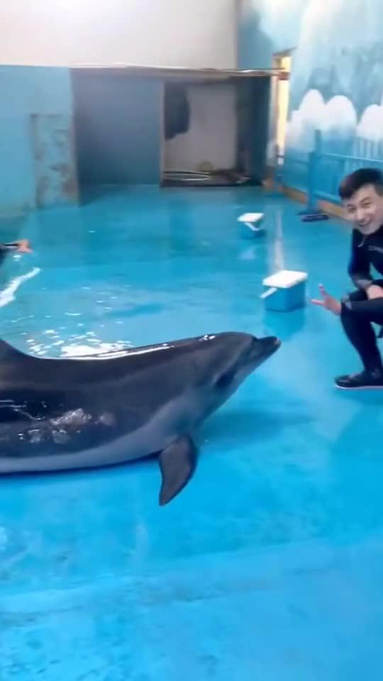 帅哥,你的小海豚太可爱了,我好喜欢!629
